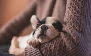 The Benefits of Pets for Seniors